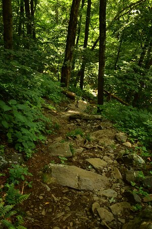 An example of the trail that continues from Observation Point down to the base.  It gets a bit more rugged.