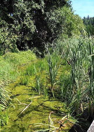 Iris Griffith Wetlands