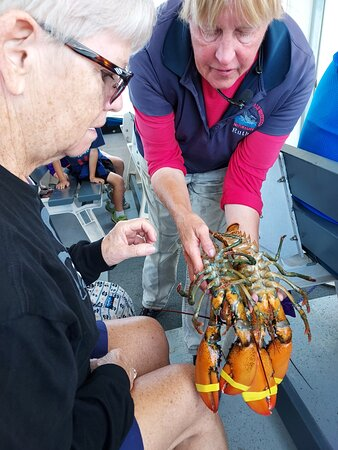 Held a Lobster