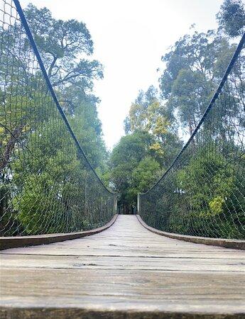 Wobble Bridge