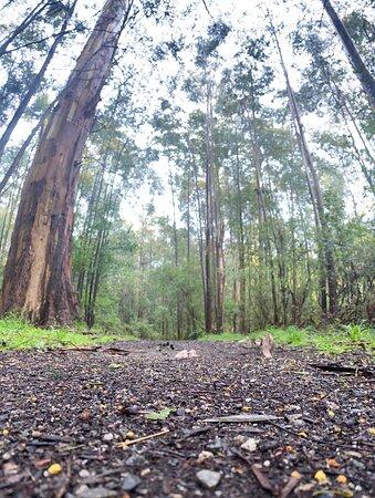 2kms of bushland walking tracks