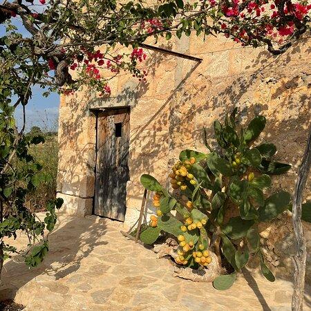 Your wine 🍷   Your piece of Mallorca 🏝 g r a p e v i n e  s p o n s o r s h i p DE.WeinFeldSineu.com EN.WeinFeldSineu.com weinfeld.sineu@gmail.com 🛒WINE SHOP DE.WeinFeldSineu.com/shop EN.WeinFeldSineu.com/shop You could find us on INSTAGRAM: instagram.com/Weinfeld.Sineu ☀️ #weinfeldsineu #mallorca #redwine #whitewine #wine #rebenpatenschaft #grapevinesponsorship #blancdenoir #rotwein #weißwein #weinstock #ökologisch #sineu #weinberg