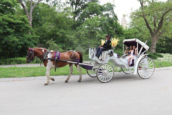 NYC Horse Carriage Rides (New York) - 2021 Alles wat u moet weten VOORDAT  je gaat - Tripadvisor