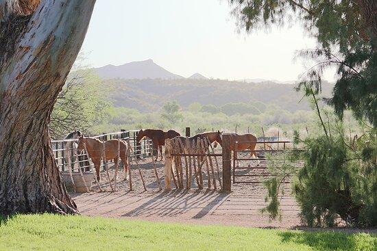 Horseback riding in Wickenburg, Arizona, just over an hour northwest of Phoenix.
