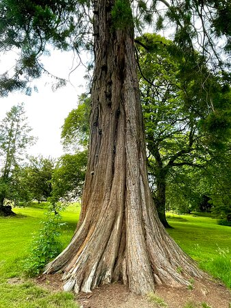 """""""Of all man's works of art a cathedral is the greatest. A vast and majestic tree is greater than that."""" - Henry Ward Beecher"""