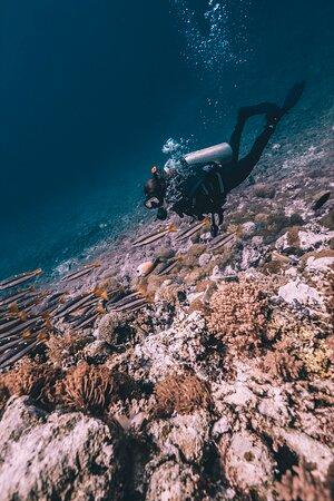 Advanced Adventure,Dpm Diving Koh Tao Thailand