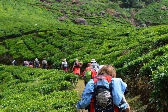 Darjeeling Tea Tour