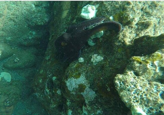 Foto 6-Hour Lanai Snorkel & Dolphin Tour from Lahaina