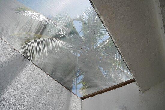 La delicia de tomar un baño con las palmeras y el sol de techo