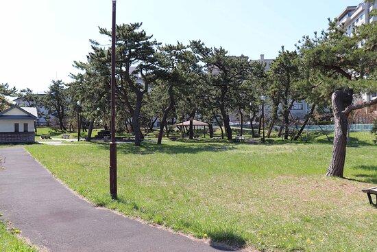 緑の芝生と木々
