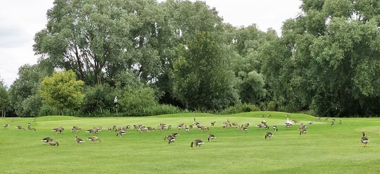 Visited on Sunday 11th July 2021 As part of a 2 day, 1 Night Bed, Dinner & Breakfast with 2 round Golf Weekend. Stayed at the Willows Training Centre rather than the main complex as it was about £40 a night cheaper with the same terms.  Geese can be a problem