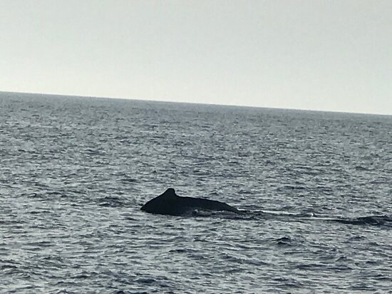 Great Whale Watching Company