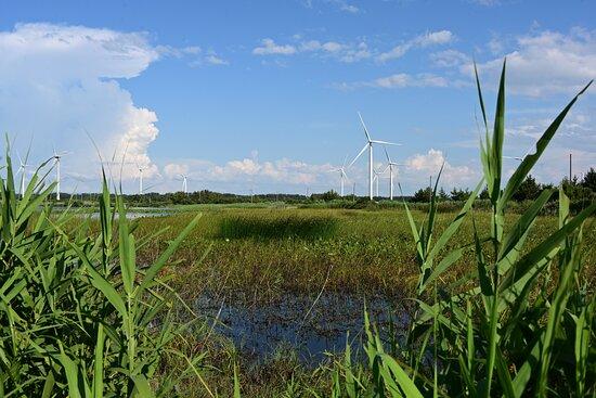湿原の雰囲気と風量発電のとりあわせ