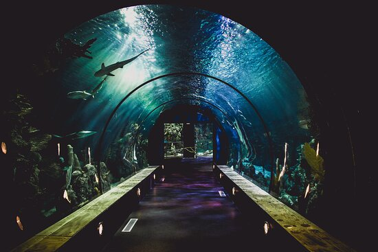 The aquarium is 10 minutes away from the hotel