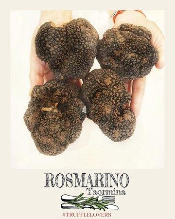 Tartufo nero estivo Summer black truffle
