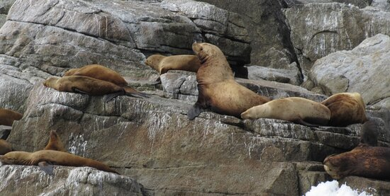 Sea Lions on the rocks (boat tour)