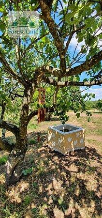 Азейтау, Португалия: Nosso espaço Zen e Parque de Piqueniques Forest Land.