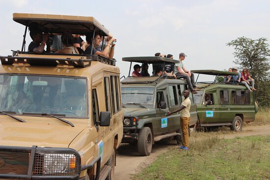 Safaris in Afraica