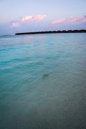 Atardecer en la playa con las habitaciones sobre el mar de fondo y un pequeño tiburón de puntas negras en la orilla.