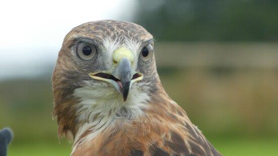 One of the stunning birds.