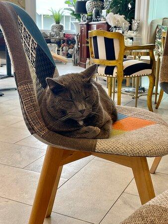 Mr Hugo our cat