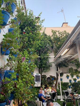 Nombreuses plantes décoratives