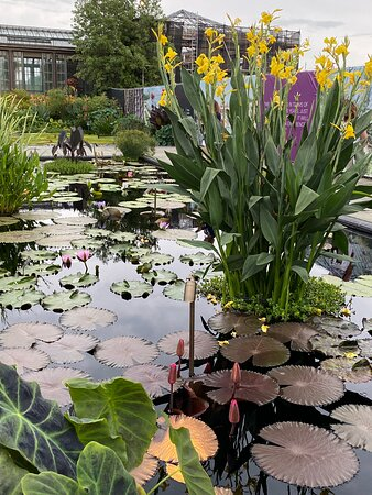 Lily Pond section