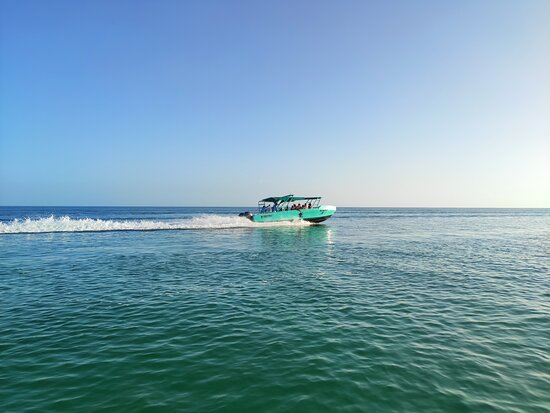 Gambar Whale Shark and Snorkeling Adventure from Isla Holbox