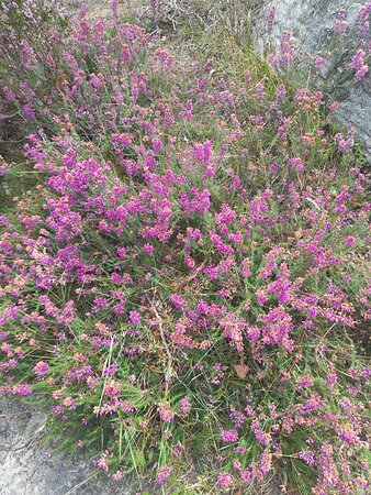 Fleurs préférés des abeilles :-)