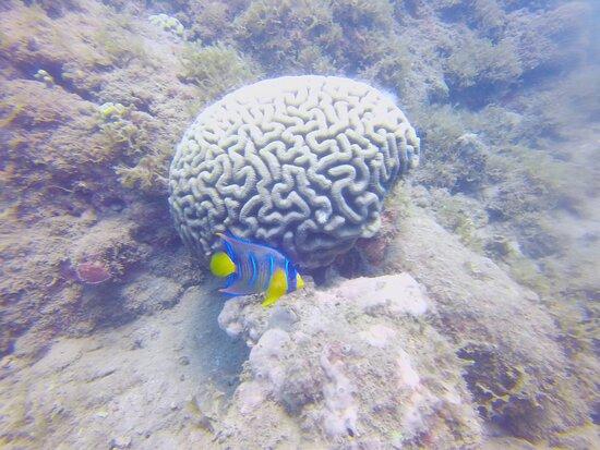 Tambíen en la playa de Taganga hay bastante corales y peces.  Desubre la vida submarina y experimenta el buceo en la playa por el precio de 80.000 COP!!!