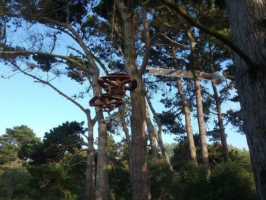 Filets dans les arbres plage Quo Vadis à Trégastel.