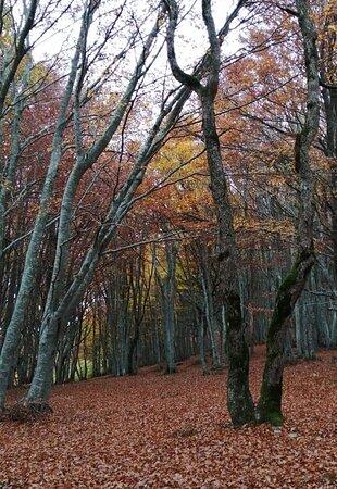 Μάρκε, Ιταλία: Riserva Naturale Regionale Monte San Vicino e Monte Canfaito : passeggiare qui, tra piante secolari e foglie dal colore dell'oro, è semplicemente un incanto ... (Novembre 2019) P.s. purtroppo le foto non rendono giustizia ai colori 😕