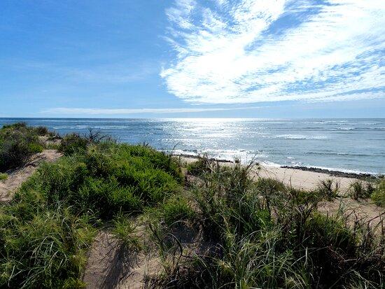 Vegetation of the dune
