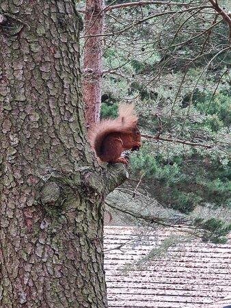 Rdd squirrel