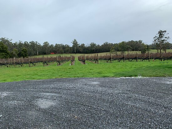 Full Day Tamar Valley Wine Tour: Cabbage Tree Hill - young vines
