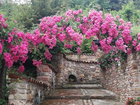 """Arco di roselline, vincitore del primo premio """"Recoaro in fiore""""."""