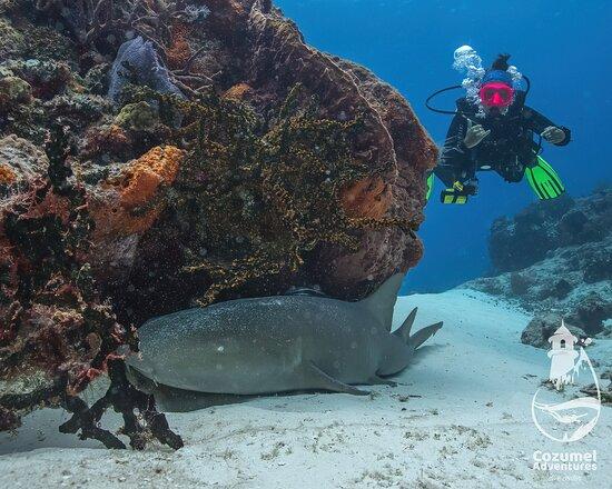Cozumel, Messico: Nurse shark!!