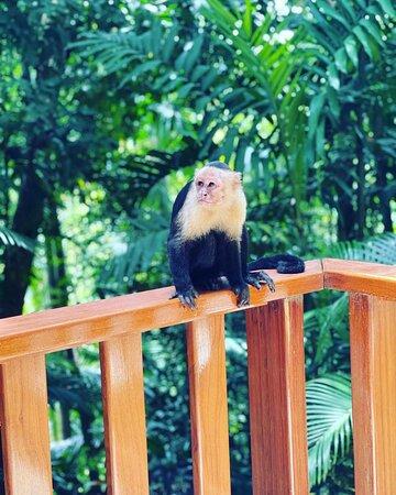 منتزه مانويل أنطونيو الوطني, كوستاريكا: Manuel Antonio, Costa Rica 🇨🇷