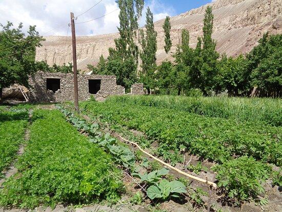 Tayikistán: Widać ,że na przydomowych poletkach uprawia się nie tylko ziemniaki .