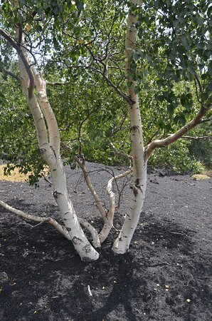 Etna excursion: vegetazione sull'Etna