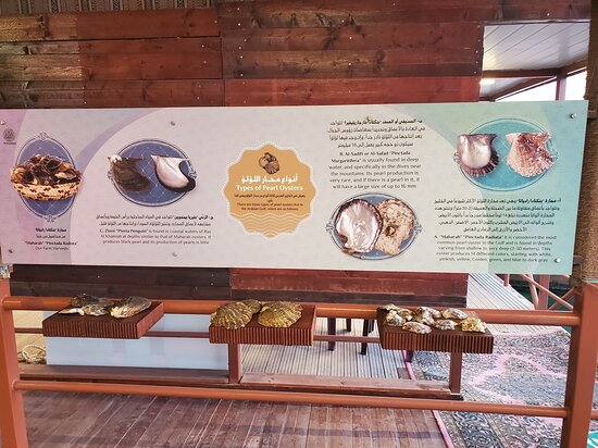 Types of oysters and pearls