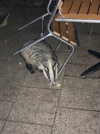 Loving the wild life! Badgers spotted last night outside our lodge on moorland view.