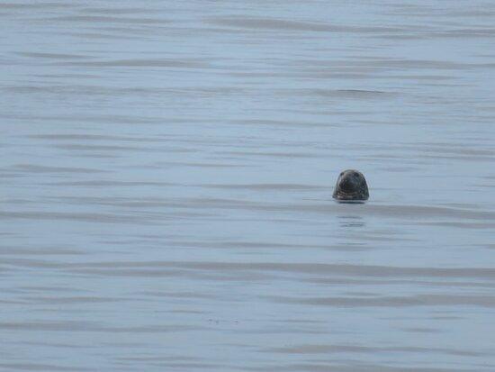 Seal at breakfast…