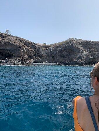 Dauphins, baleines et cie