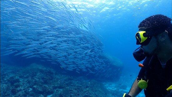 Racha Noi & Racha Yai 3 dykk (certificerede dykkere) - Phuket Dive Tours-billede