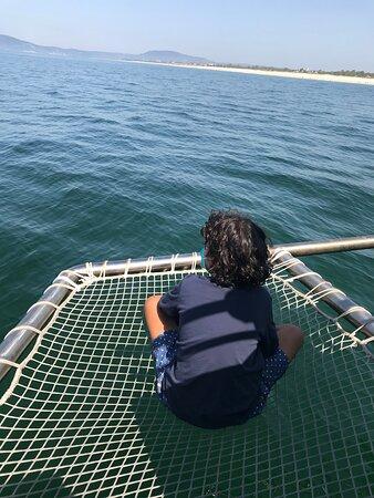 Observação golfinhos