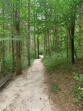 The trail to Cedar Sink through a beautiful forest