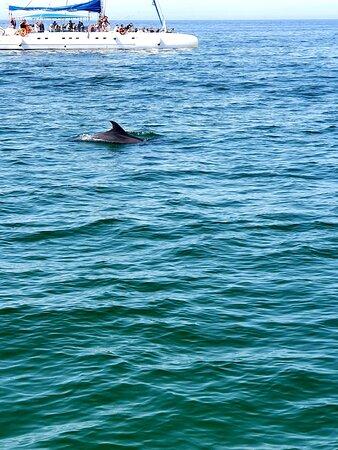 Dolphin Bay PT Resimleri - Setubal Fotoğrafları - Tripadvisor