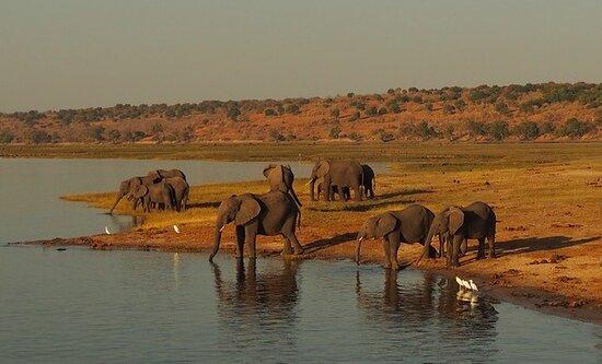 Chobe elephants