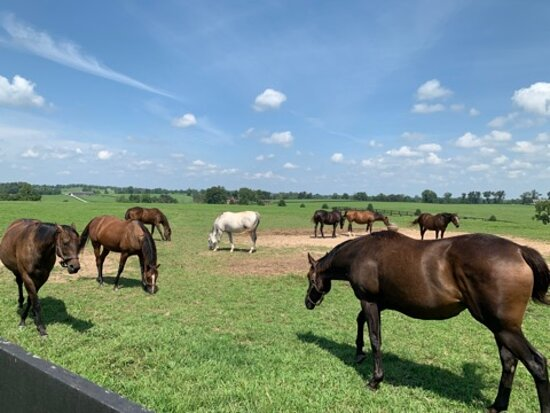 Sun Valley Farm
